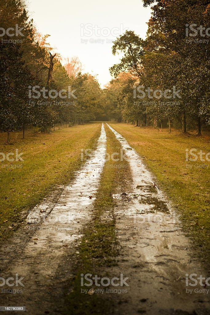 Plantation forest highway royalty-free stock photo