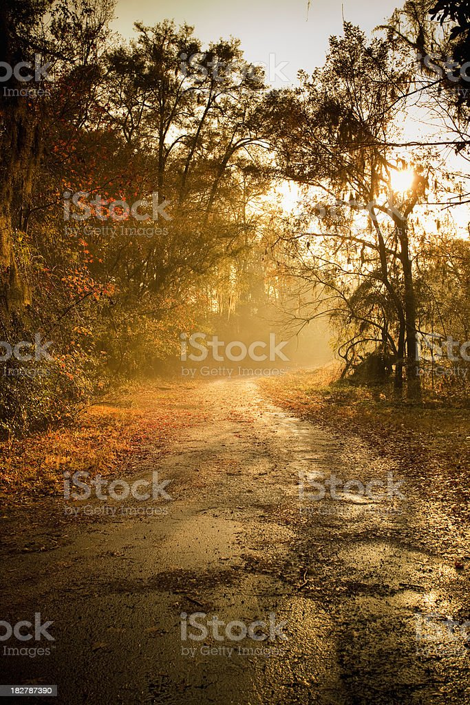 Plantation forest highway stock photo