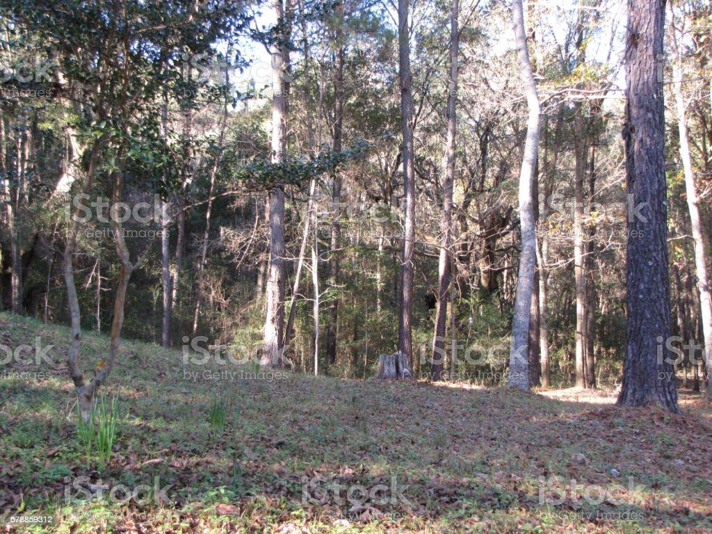 Plantation Grounds photo libre de droits