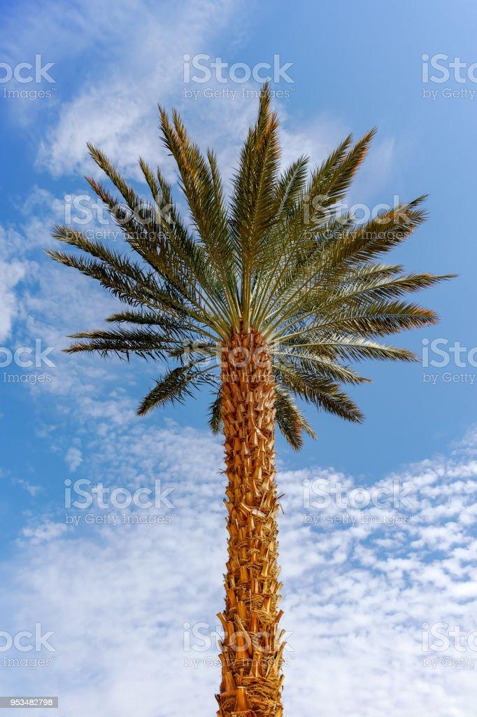 Palm Desert Dating servizio