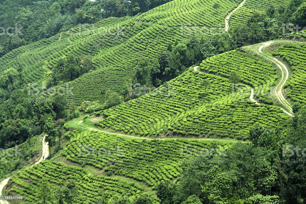 Plantation on Mountain Slope royalty-free stock photo