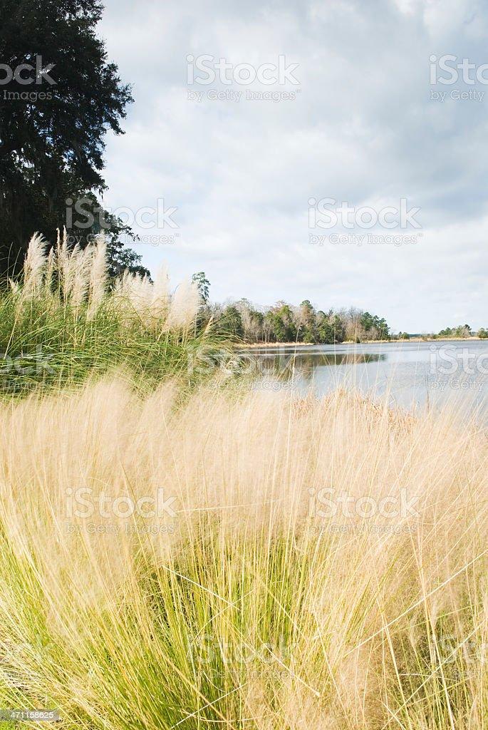 Plantation scenery (Middleton Place, SC) - I royalty-free stock photo