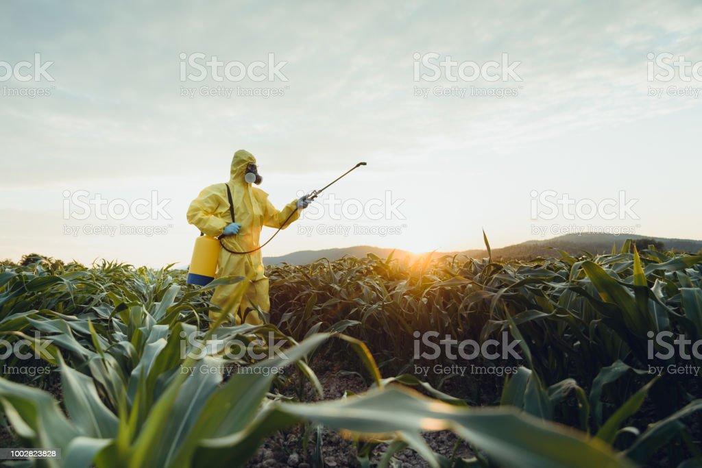 Plantação de pulverização - foto de acervo