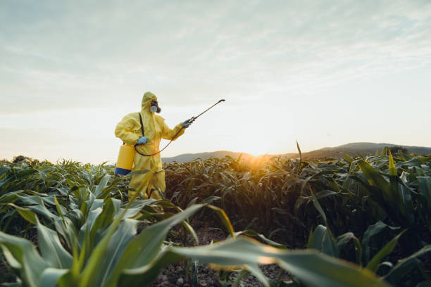 Plantation spraying Worker spraying toxic pesticides or insecticides on corn plantation crop sprayer stock pictures, royalty-free photos & images