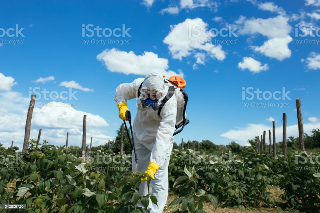 Plantation spraying stock photo