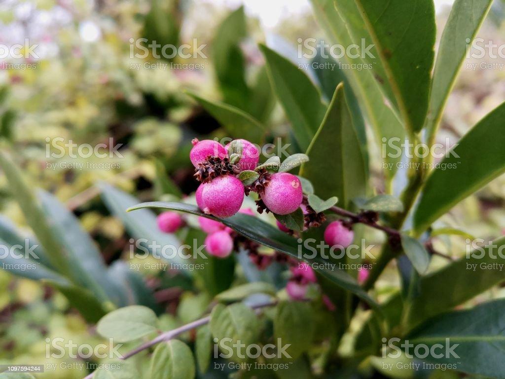 Plante - Photo