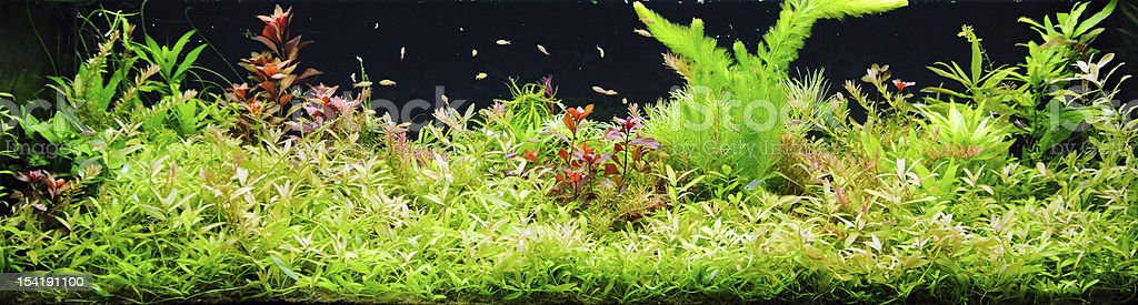 Planet aquarium – Foto
