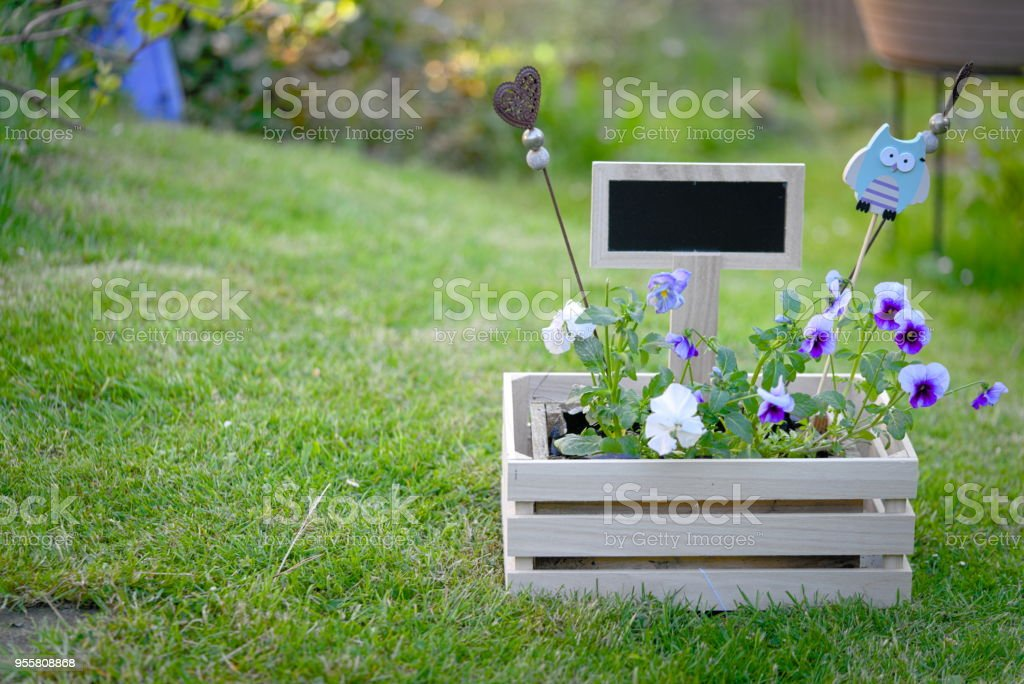 flower box with viola and horned violet and a black board on green...