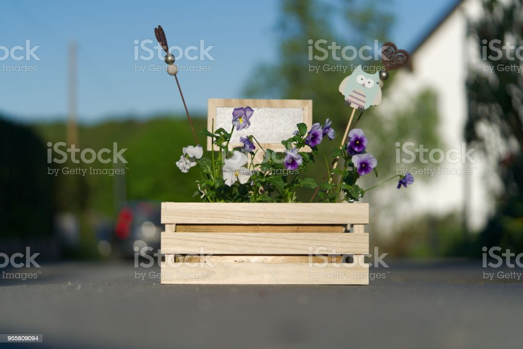 flower box with viola and horned violet and a black board