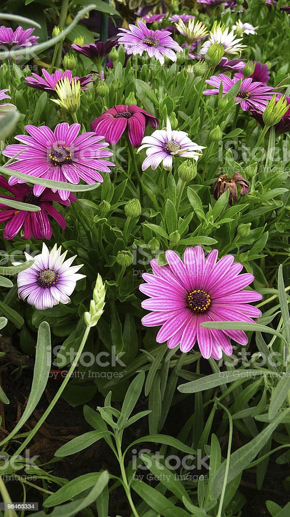 planted flowers royalty-free stock photo