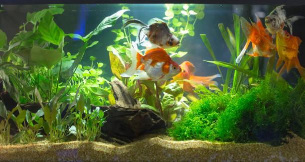 planted freshwater aquarium - home aquarium stock pictures, royalty-free photos & images