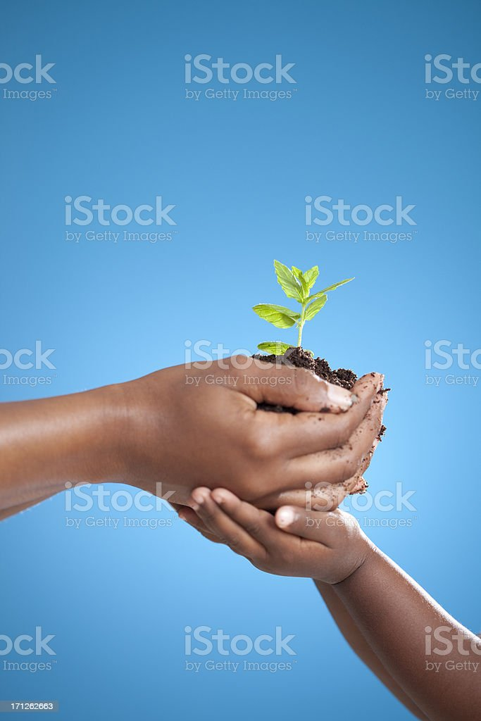 Planted plant with a child. stock photo