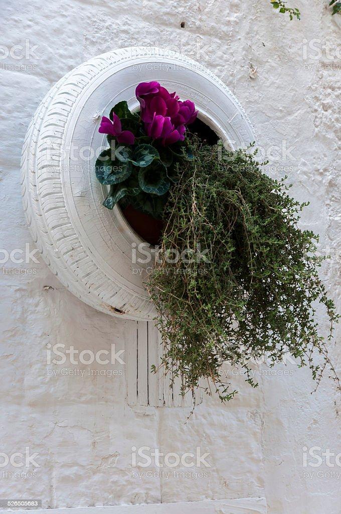 Planter in historic Polignano stock photo