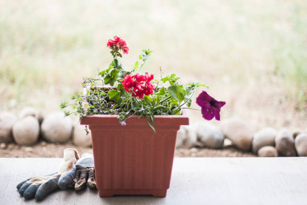 Planter on Porch stock photo