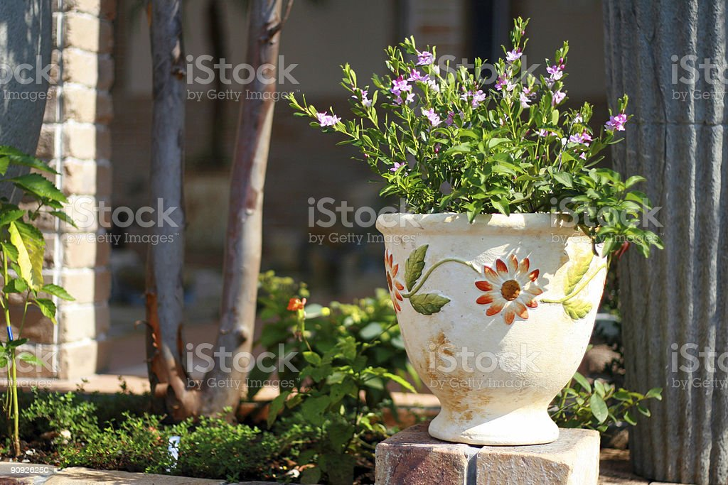 Planter pot royalty-free stock photo