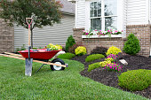 Wheelbarrow standing on a neat manicured green lawn alongside a flowerbed while planting a celosia flower garden around a house with fresh spring plants