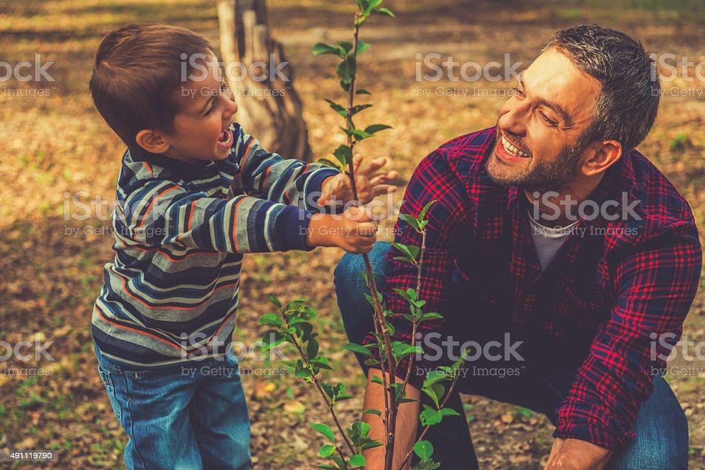 Planting a family tree. stock photo