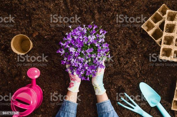 Planting a plant on garden soil texture background top view picture id944712348?b=1&k=6&m=944712348&s=612x612&h=bjveirpf tk5toryvkbqesiynh hilsxutlmysnl5du=