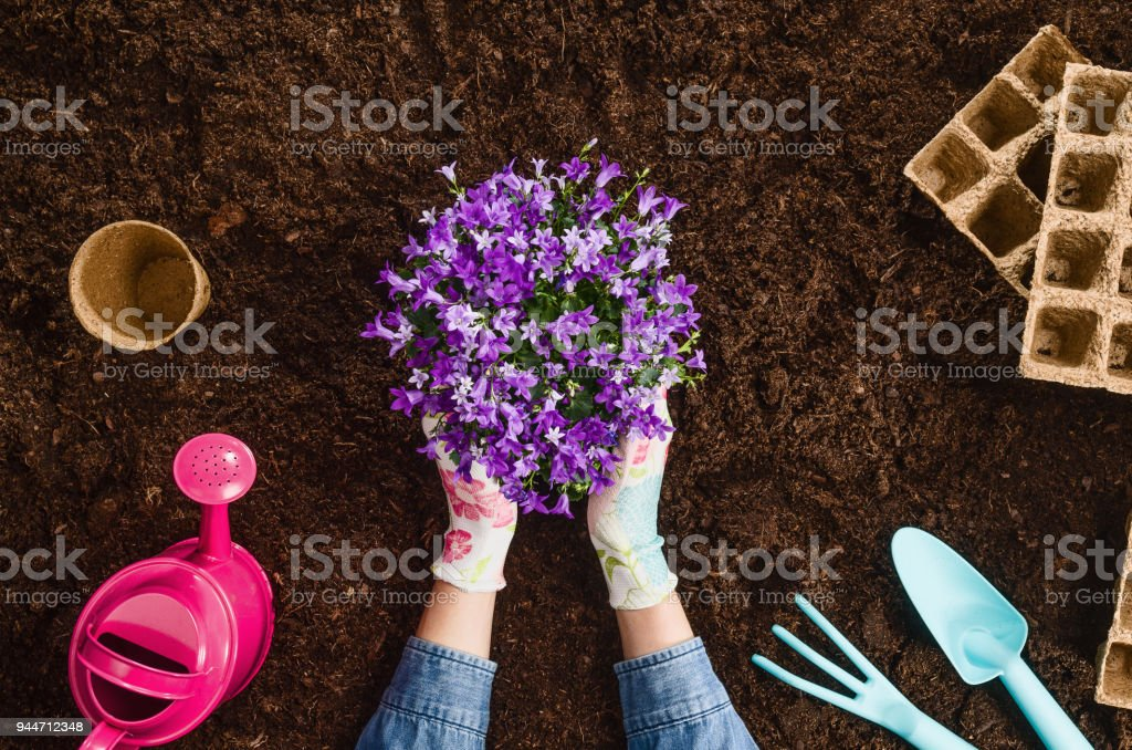 Planting a plant on garden soil texture background top view stock photo