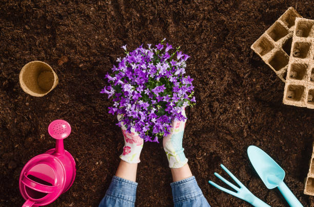Planting a plant on garden soil texture background top view Planting a plant with gardening tools on fertile soil texture background seen from above, top view. Gardening or planting concept. Working in the spring garden. gardening stock pictures, royalty-free photos & images