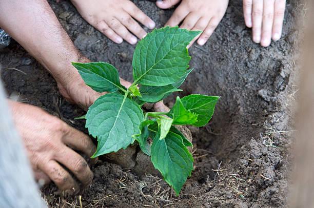 plantando uma árvore jovem - teacher school solo imagens e fotografias de stock