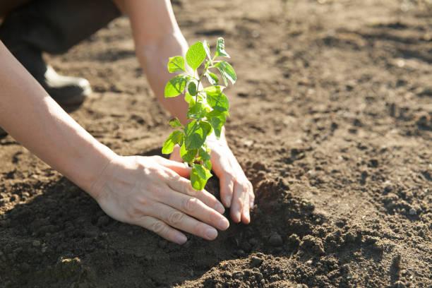 het planten van een boom - herbebossing stockfoto's en -beelden