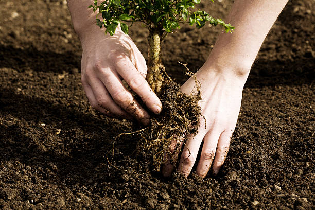 Planting a tree stock photo