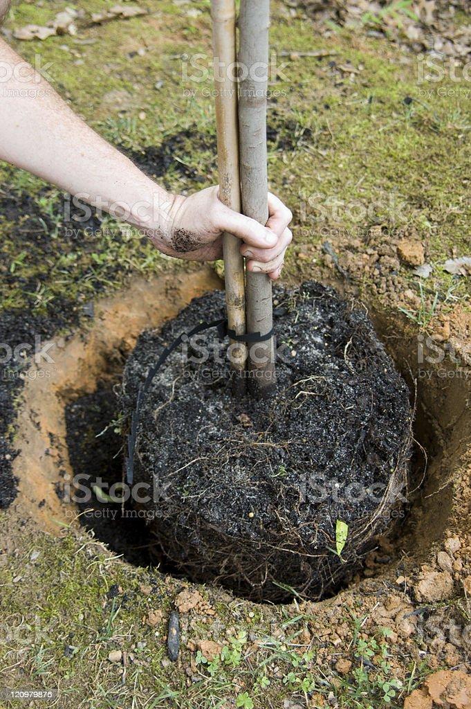 Planting a Tree Series stock photo