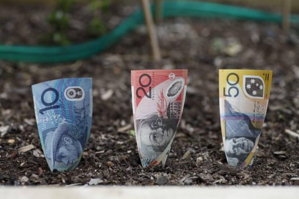 Planting Australian money in Garden Bed stock photo
