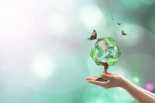 Planting  bio recycle world globe on volunteer's hands for sustainable natural environment concept. Elements of this image furnished by NASA Planting  bio recycle world globe on volunteer's hands for sustainable natural environment concept. Elements of this image furnished by NASA environmental consciousness stock pictures, royalty-free photos & images