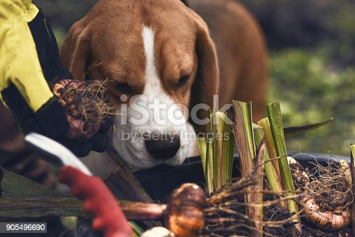 dog, bulbs, flower pot  and gardening tools in the garden outdoors