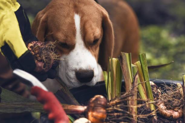 bauchige Pflanzen im Garten mit meinem Hund – Foto