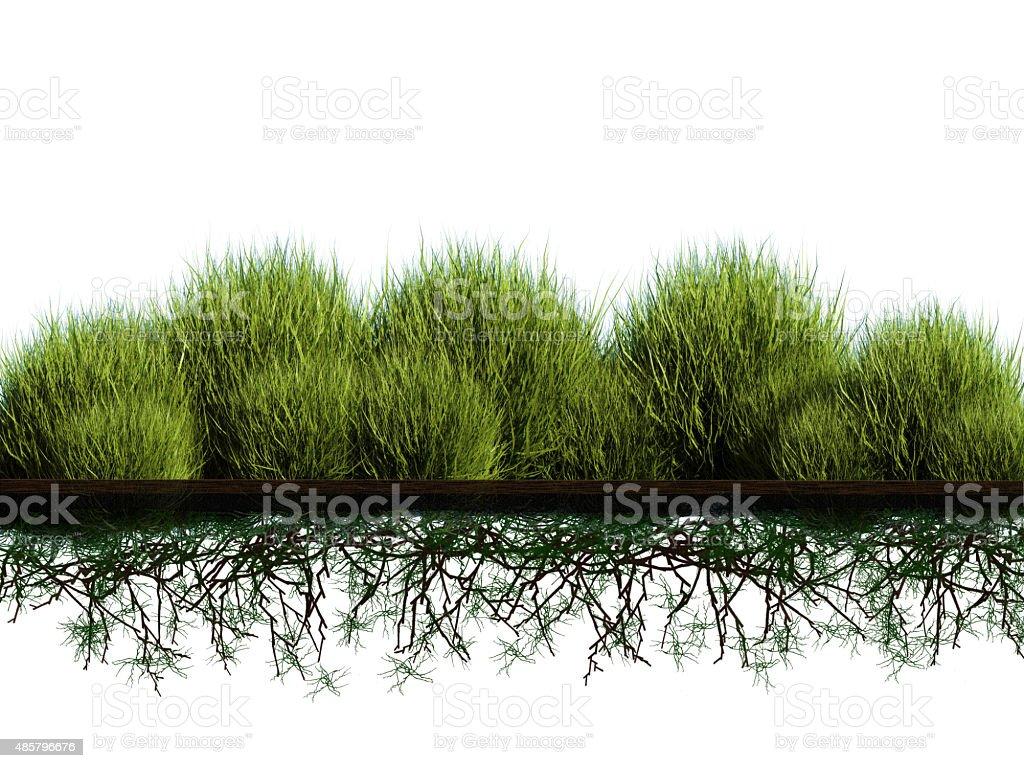 planting bush stock photo