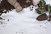 istock Planting Cucumber Seeds and Seedlings 1070493420