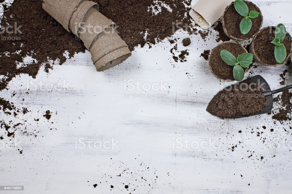 Planting Cucumber Seeds and Seedlings stock photo