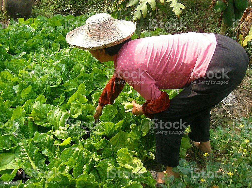 Planting farmer royalty-free stock photo