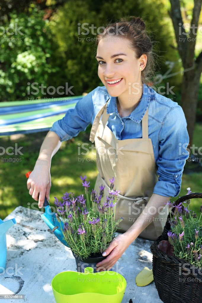 Planting flower garden Female plants in pot plants forming a beautiful composition flower Adult Stock Photo
