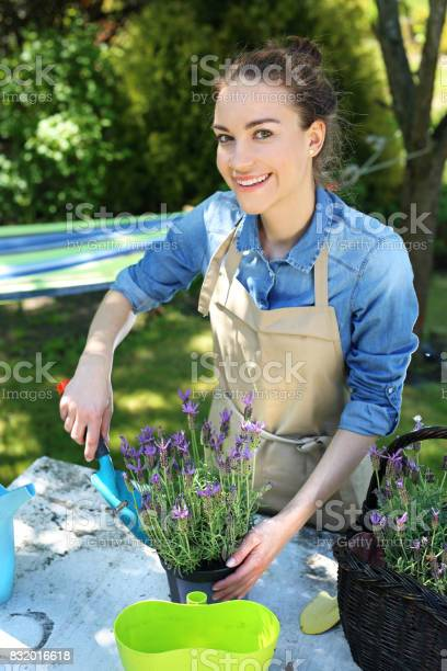Planting Flower Garden Stock Photo - Download Image Now