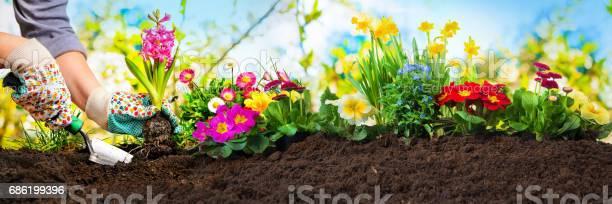 Planting flowers in a garden picture id686199396?b=1&k=6&m=686199396&s=612x612&h=4h0sr fvyycbyhrsu09yulxw kglq6ihwwjjmdpjuha=