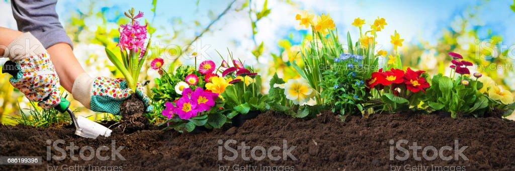 Planter des fleurs dans un jardin - Photo