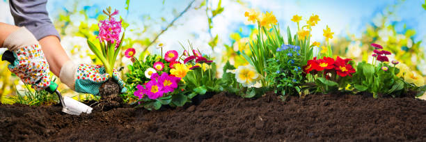 Planting flowers in a garden Planting flowers in sunny garden plant bulb stock pictures, royalty-free photos & images