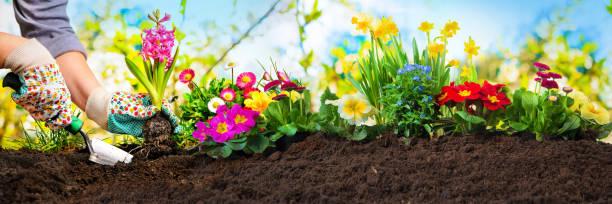 plantando flores en un jardín - jardinería fotografías e imágenes de stock