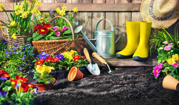 Blumen pflanzen im sonnigen Garten. – Foto
