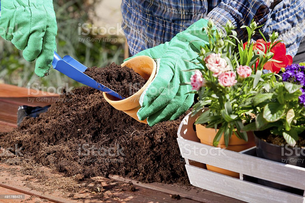 Planting flowers in the garden home stock photo