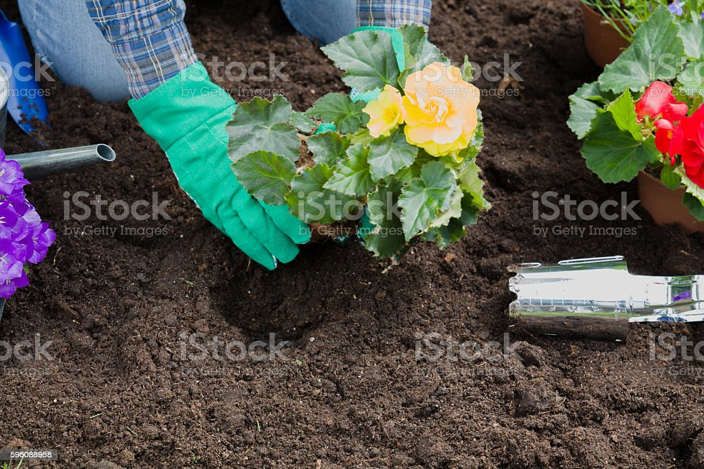 Planting flowers in the garden home royalty-free stock photo