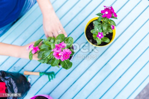 Young woman is planting flowers in flower pots