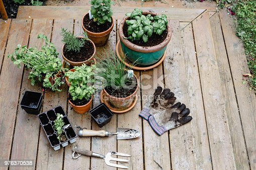 potted plant, gardening equipment, flowers, herbs
