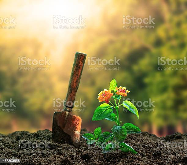 Planting flowers plant and gardening too on dirt picture id467303558?b=1&k=6&m=467303558&s=612x612&h=nf8qaxlirbdyprwlw0nx2uaisrzekuaebfmukbynnd0=