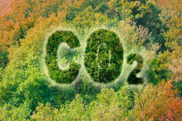 Planting more trees reduce the amount of CO2 - concept image with Co2 text against woodland stock photo