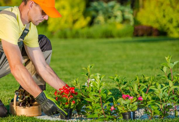 Planting New Flowers Caucasian Gardener Planting New Flowers in the Backyard Garden. landscaped stock pictures, royalty-free photos & images